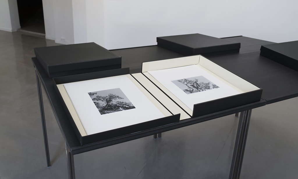 LandscapeAlbums-5872.jpg